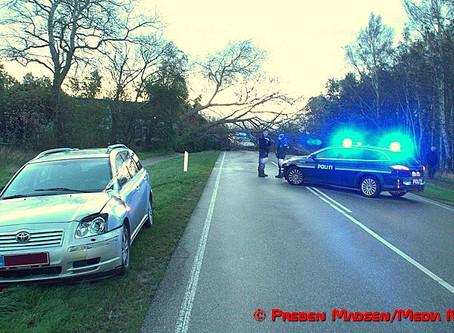 To biler skadet af væltet træ under stormen Ingolf