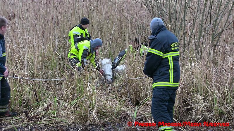 2017-02-06-Hest-i susaaen-Skelby-PrebenMadsen-IMG_7796
