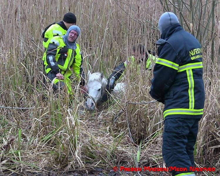 2017-02-06-Hest-i susaaen-Skelby-PrebenMadsen-IMG_7797