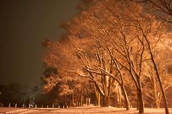 004_snow.jpg