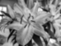 photo of flower
