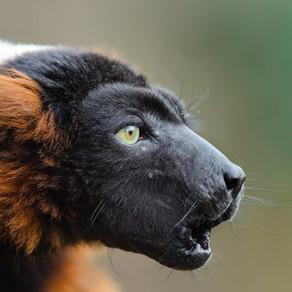 Did you know that Madagascar ...?