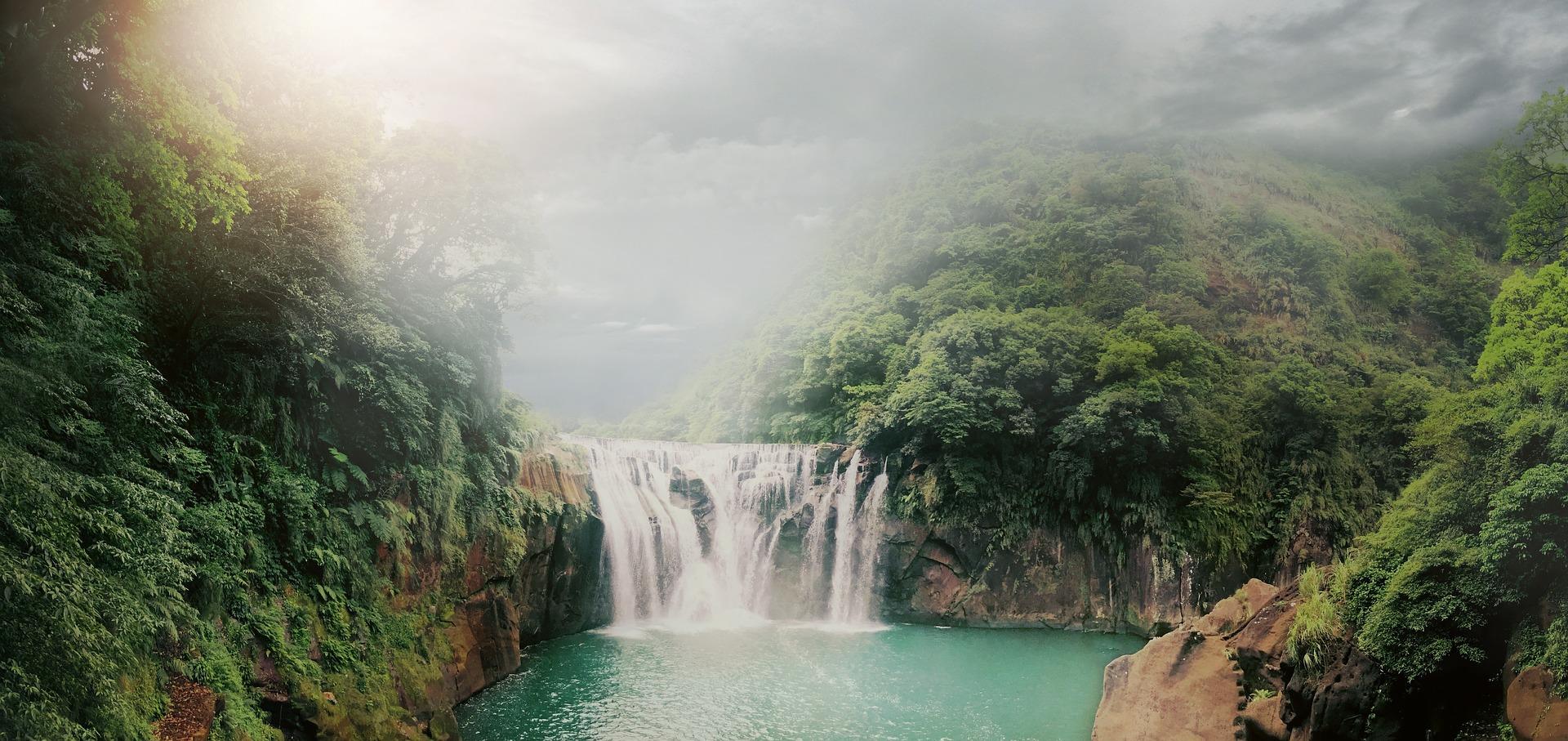 Selva africa
