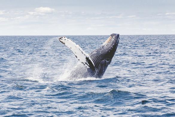 Ballenas Madagascar