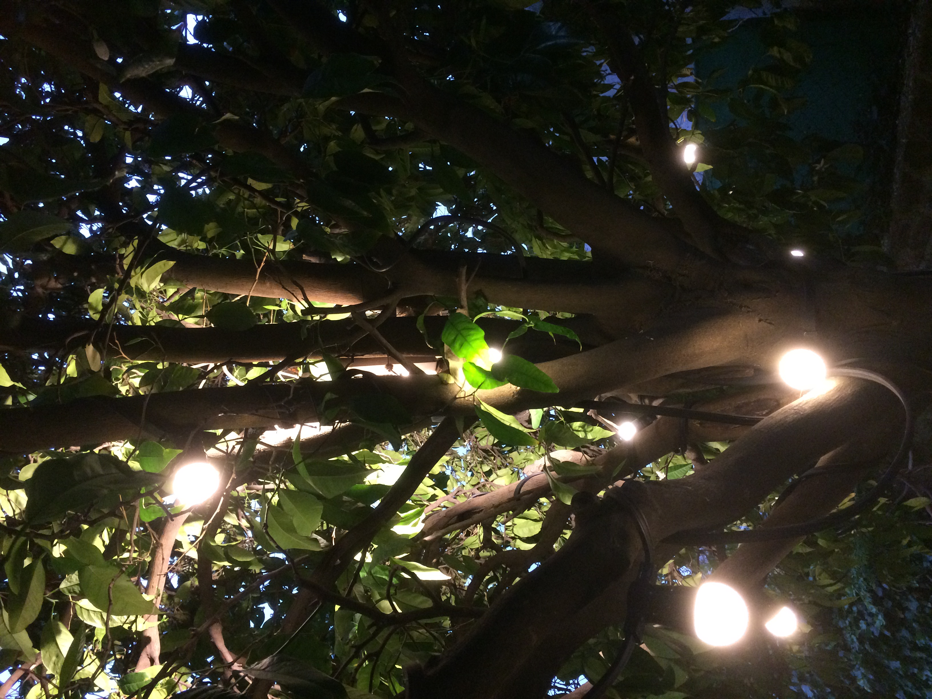 Illuminations en soirée