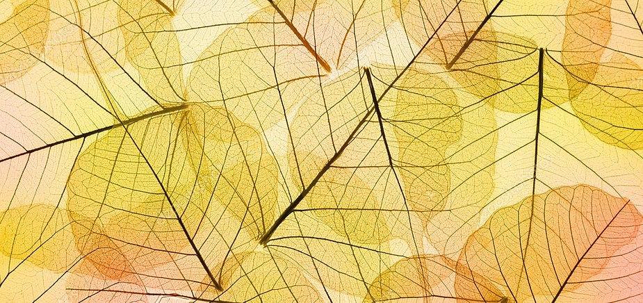 depositphotos_52716879-stock-photo-color