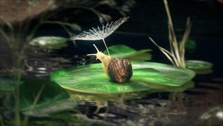 Sailing Snail