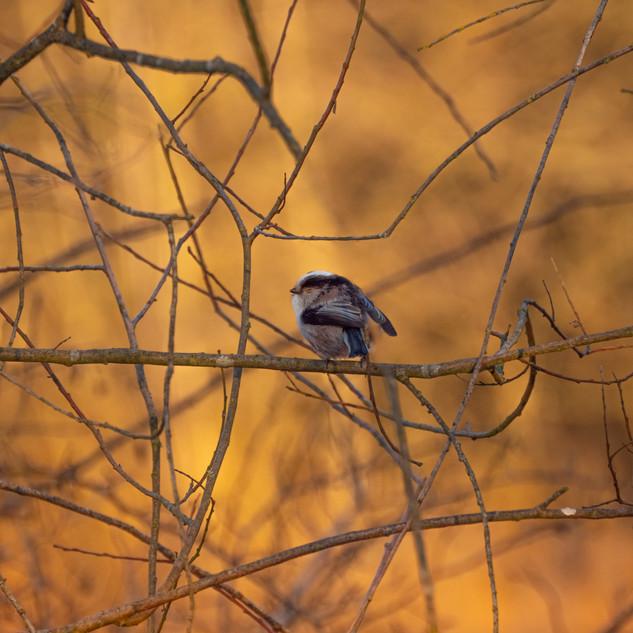 Vogel im sonnenuntergang (1 von 1).jpg