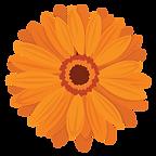 Gerbera-Orange.png