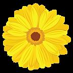 Gerbera-Yellow.png