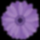 Gerbera-Purple.png