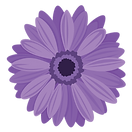 Gerbera-Purple.png