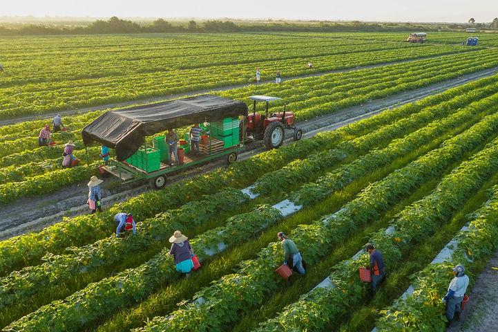 01_organic_farming_i8860_20181003_11260.