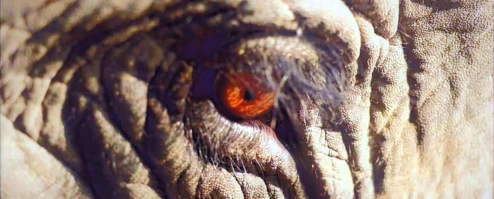 Elephant kanchi