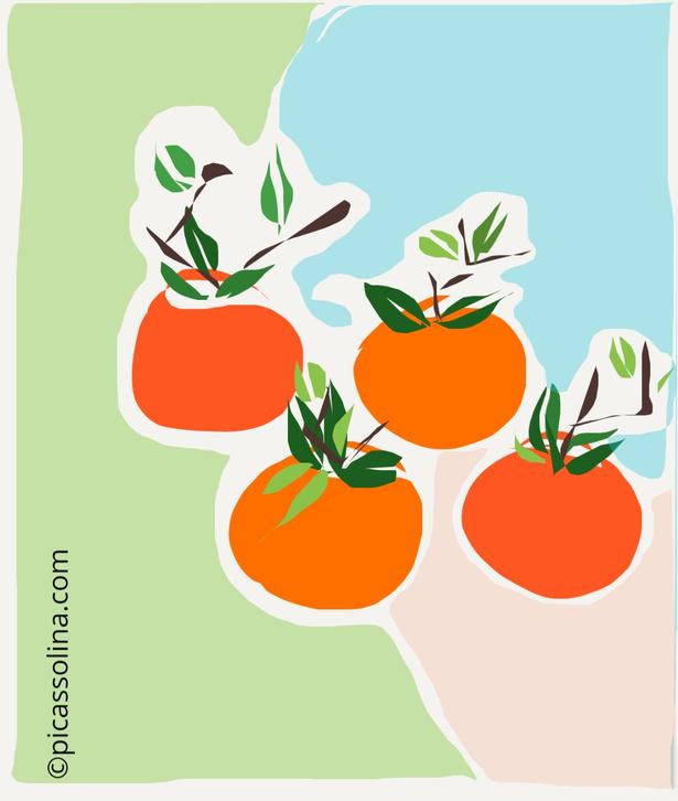 picassolina postcard illustration fruits manadrine