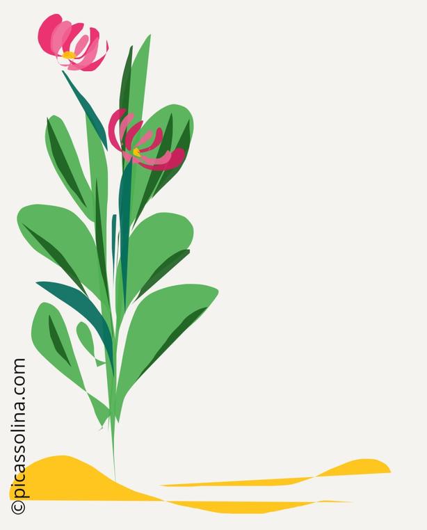 picassolina postcard illustration flower herbs