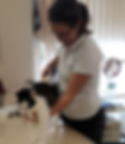 Physiotherapie Katze Hannover