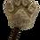 Thumbnail: Chrono Balance Pfoten-Eisform
