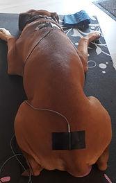 Elektotherapie Hund