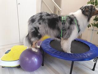 Physiotherapie für Hund Hannover
