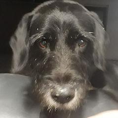 Physiotherapie für Hunde Hannover