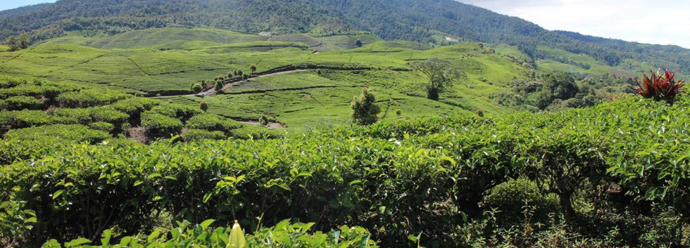 PT Mitra Ayu plantation
