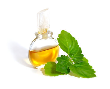 Patchouli sprig with essential oil. Isol