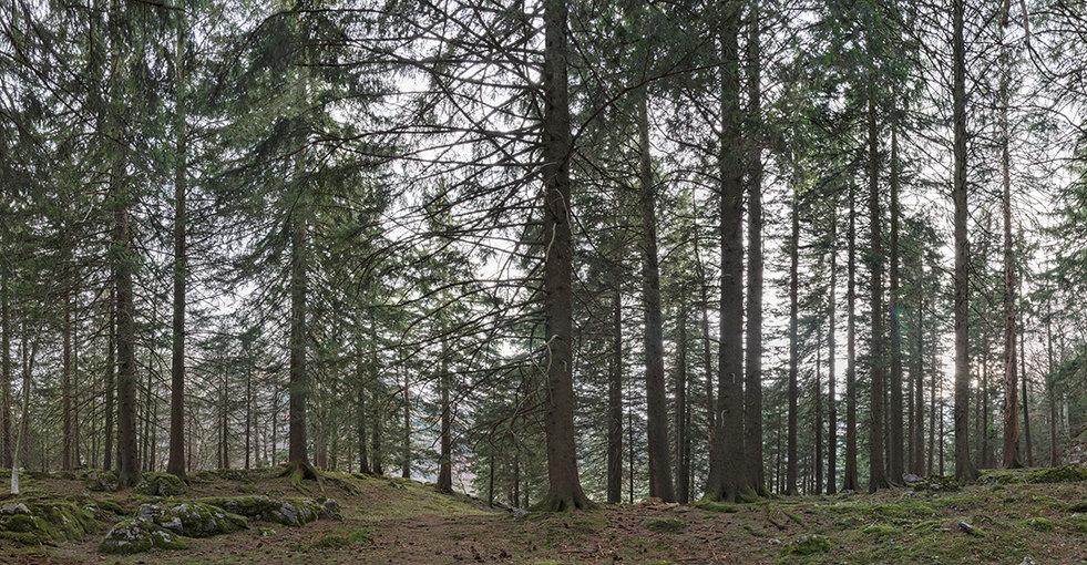 Wald für NaturMuseum St.Gallen
