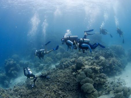 海底の世界遺産へ🐠