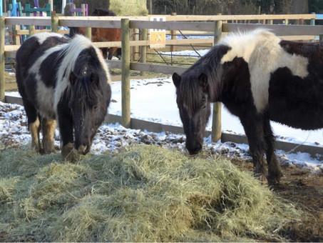 Feeding horses whilst on your walk