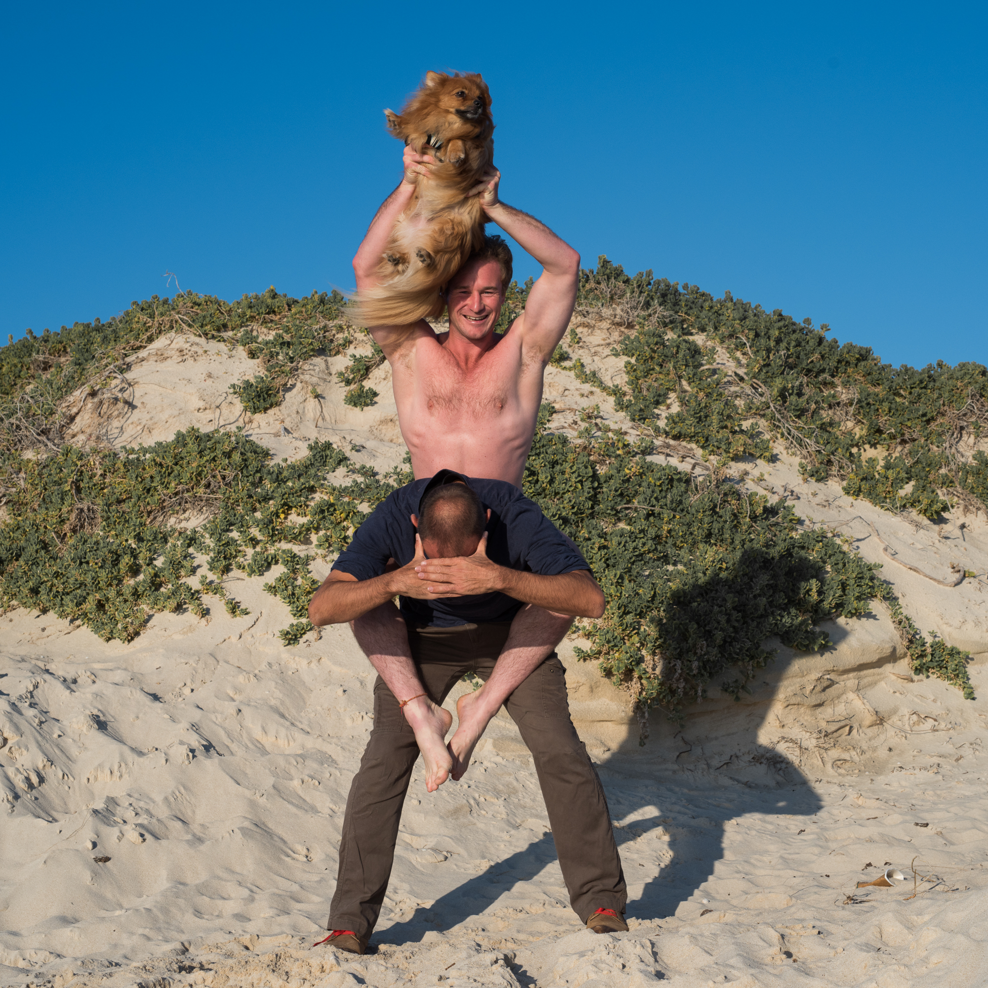 Dog Beach Perth - The top dog
