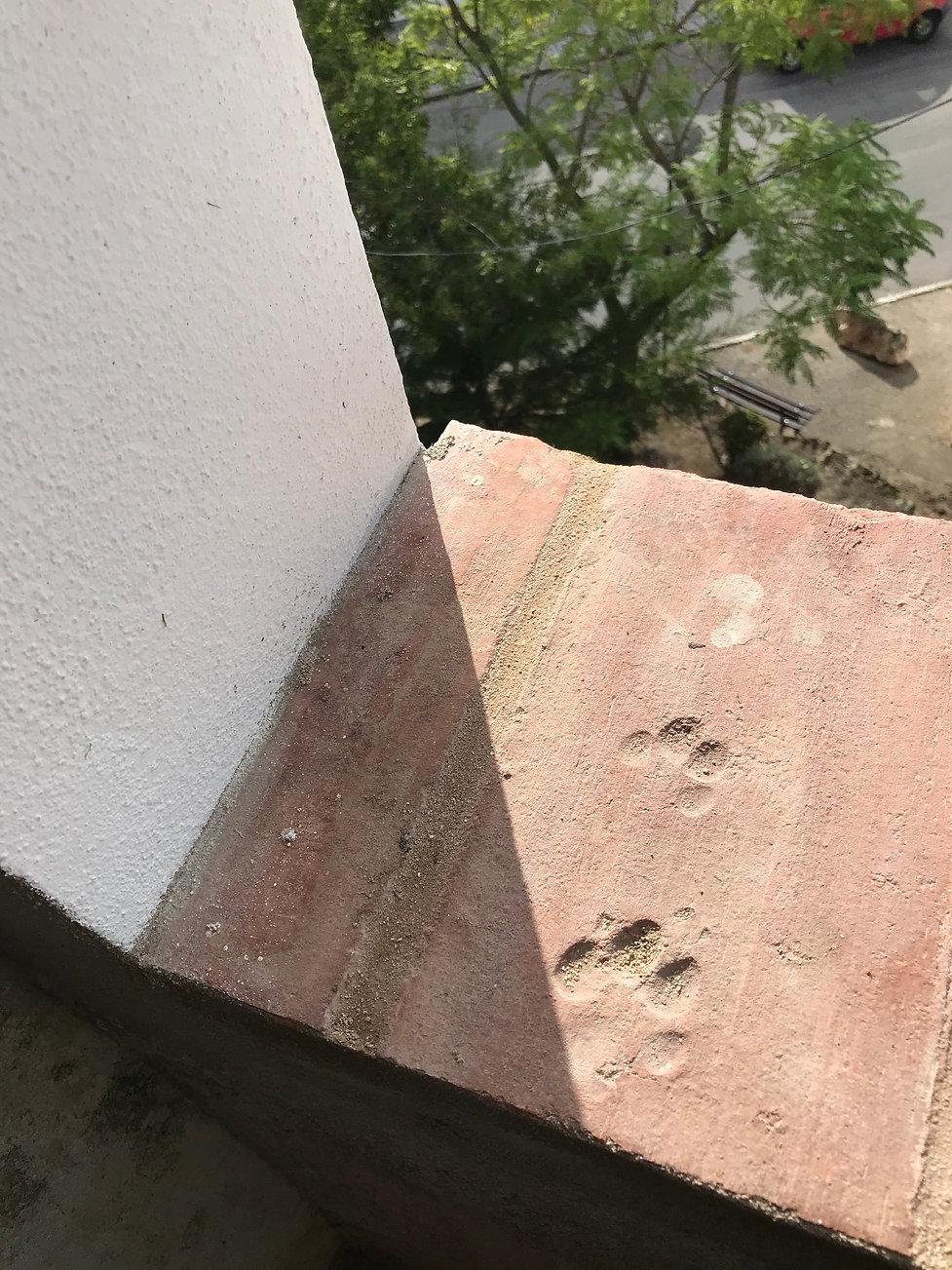 lajeta do parapeito da janela do museu com pegada de gato impressa (c) Ana Assis Pacheco