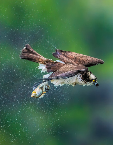 osprey shake 2-1-Edit.jpeg