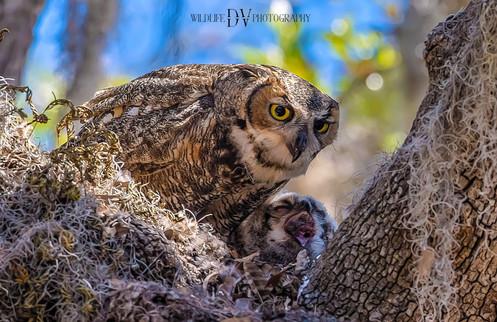 OWL N BABY LR-1.jpg