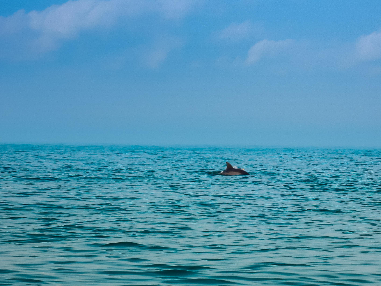 Delfín en Holbox