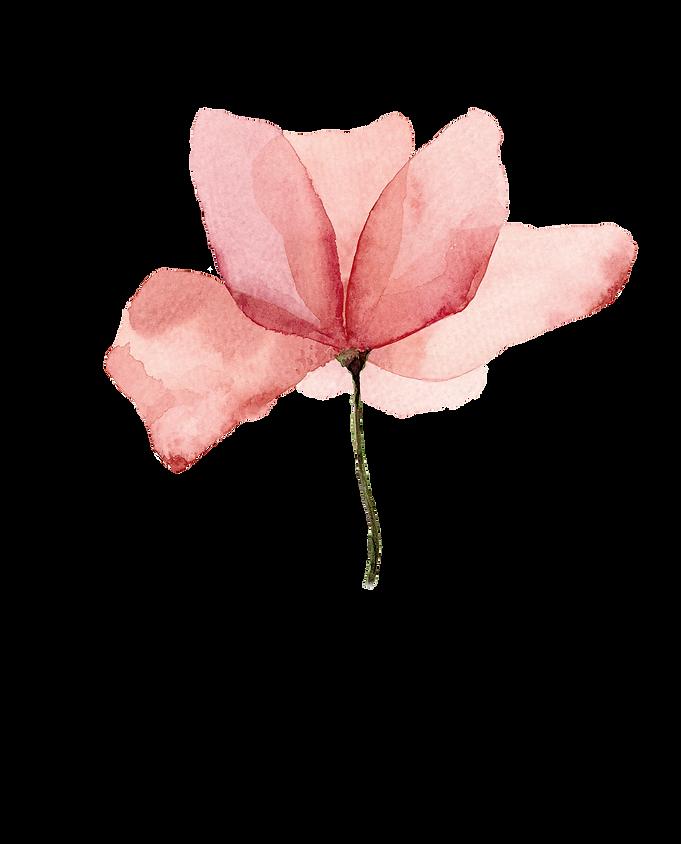 Logo Anne fleur fond transparent.png