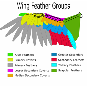 WIng Feather Groups