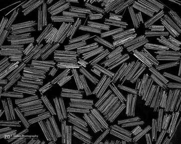 Logs from Above (B&W)