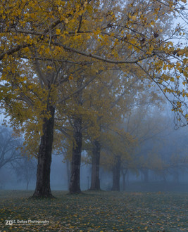 Colours in the Fog