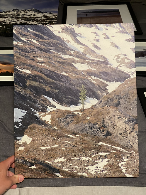 "Canvas Print ""Lone Tree"""