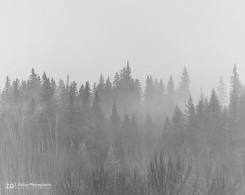 FoggyMorning_wm-3.jpg