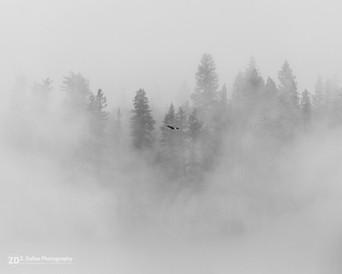 Soaring through the fog