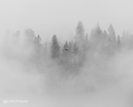 Soaring through the fog