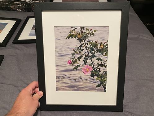 """Framed """"Wild Rose"""""""