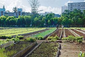 Large Scale Urban Farm.jpg