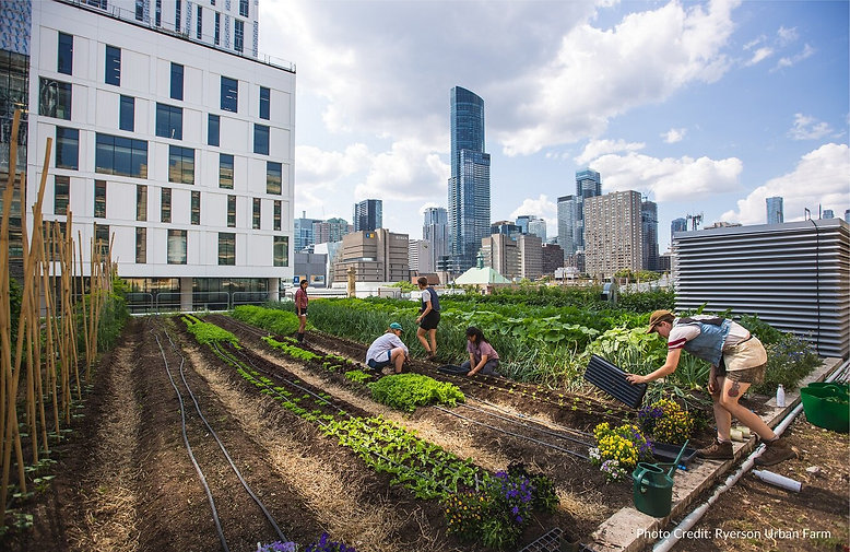 City Farm Picture.jpg