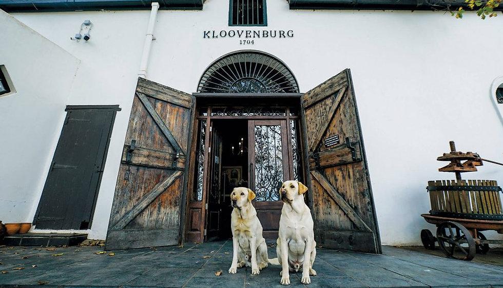 Kloovenburg-labradors_credit-Daréll-Lo