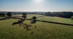 Homepage-Banner-Portman-Farms