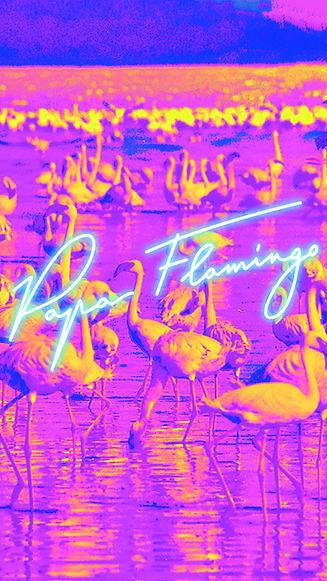 Wallpaper Papa Flamingo flamants roses.jpg