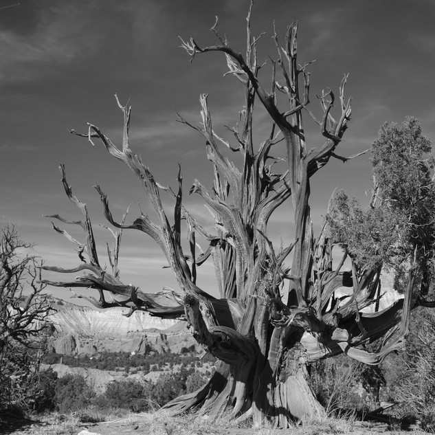 Desert Tree, Kodachrome National Park, USA